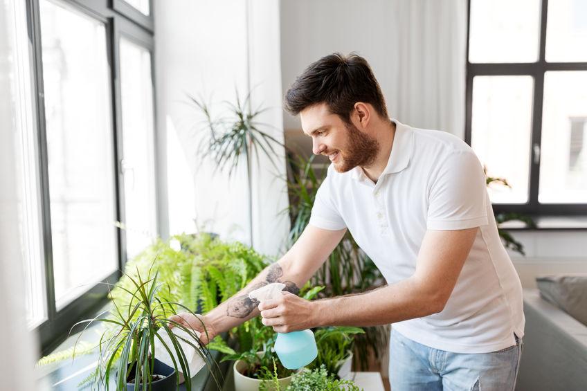 man spraying on indoor plants