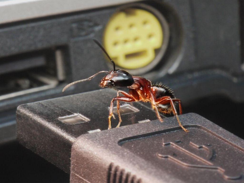 ants inside laptop