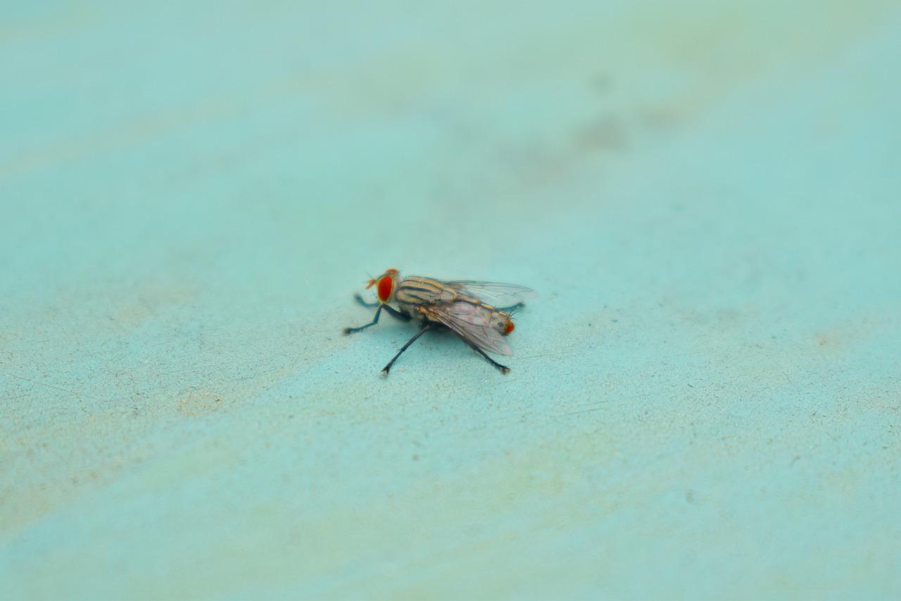 Fly Sleeping