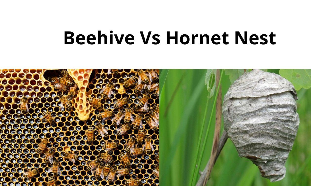 Beehive Vs Hornetnest