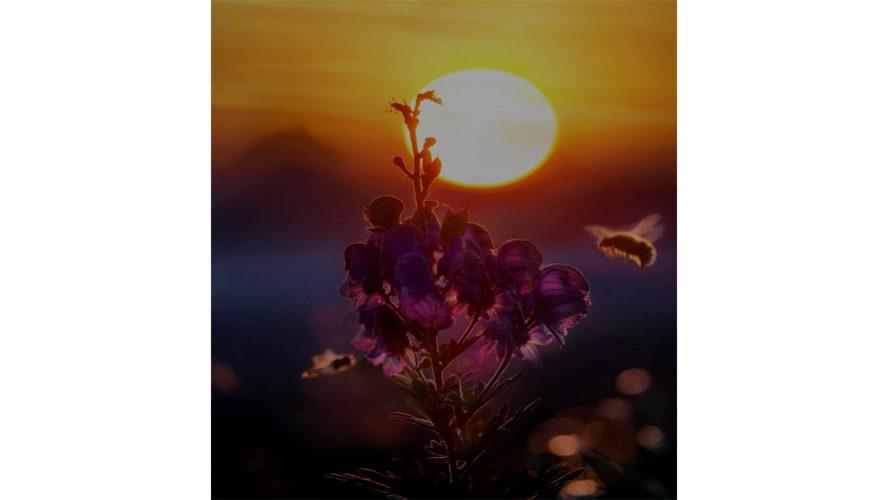 Bees At Night