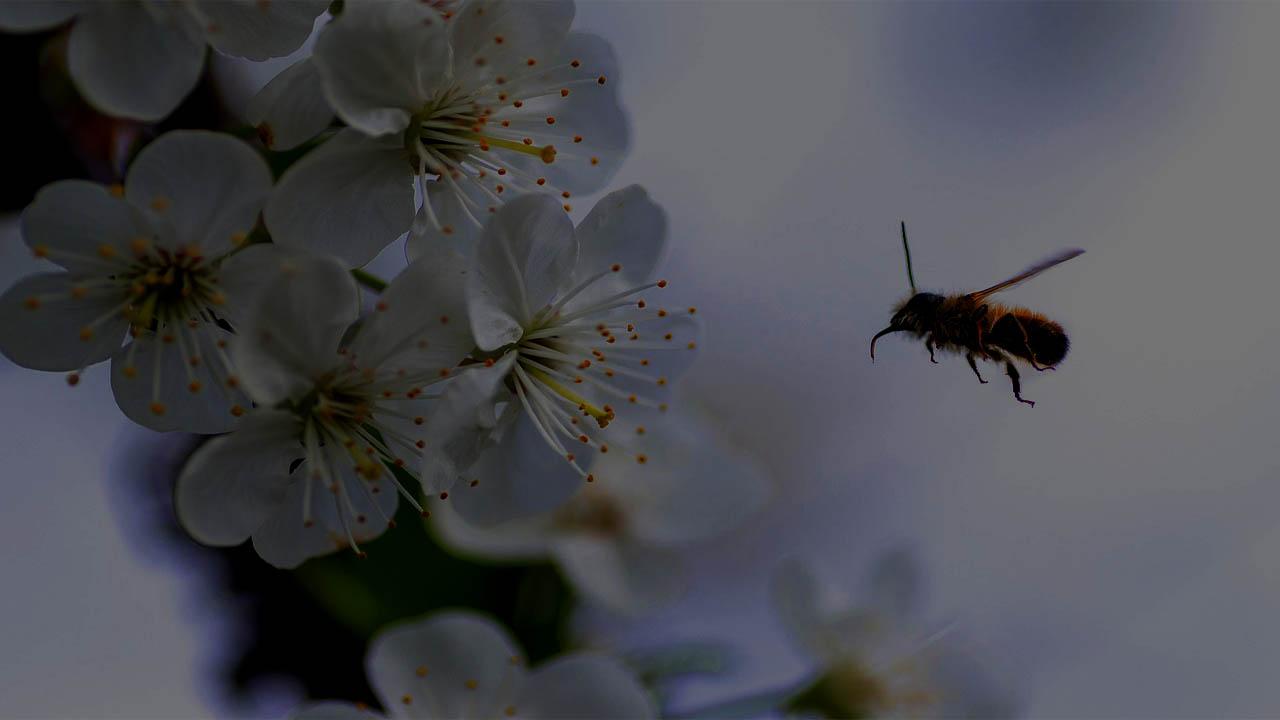Bee Encounter At Night