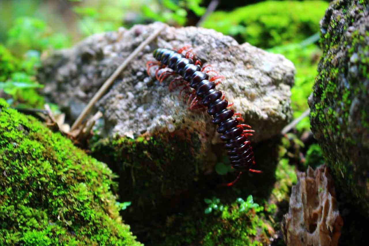 centipede in dark place