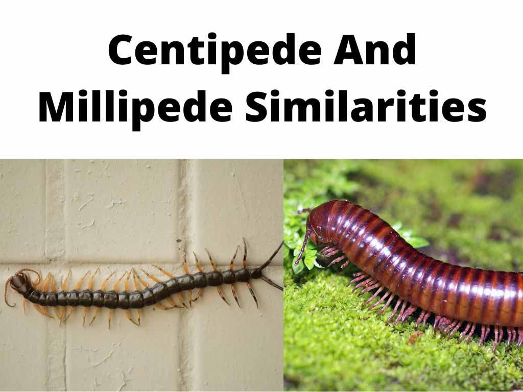 Centipede And Millipede Similarities