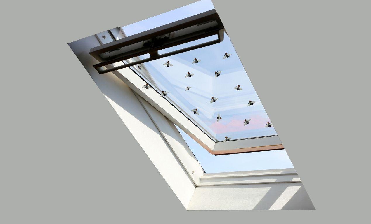 Flies inside skylight