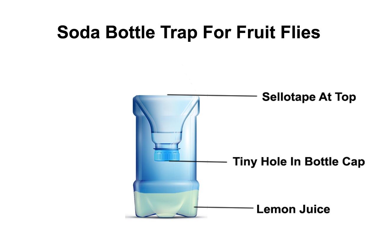 soda bottle trap real