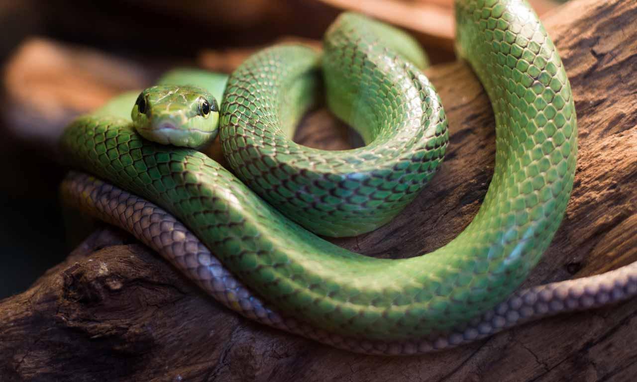 do snake feel sad