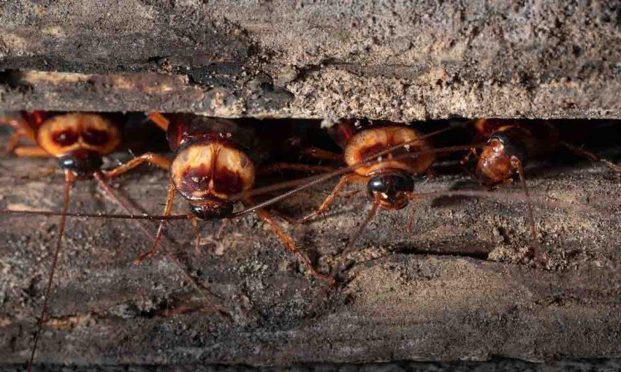 sleeping cockroaches