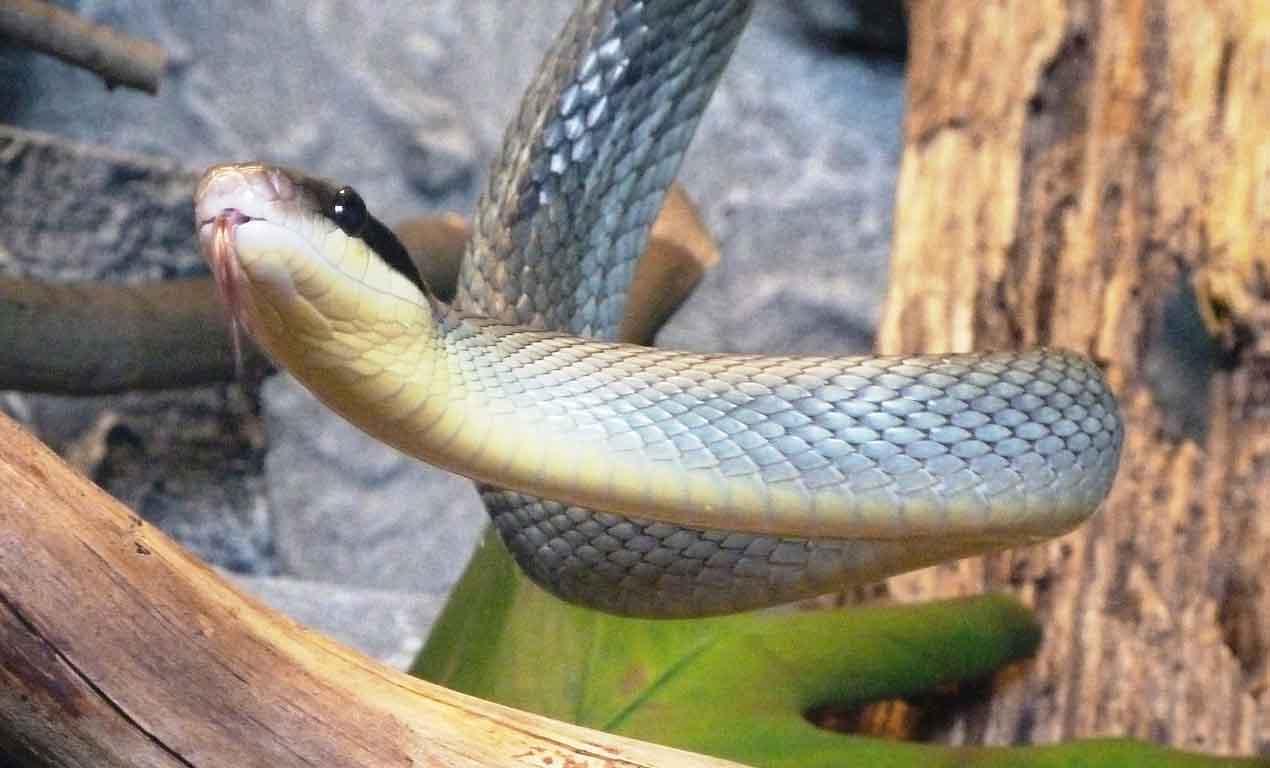 snake climbing tree