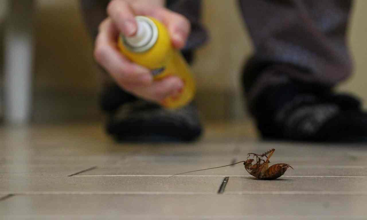 Cockroach Killer Spray