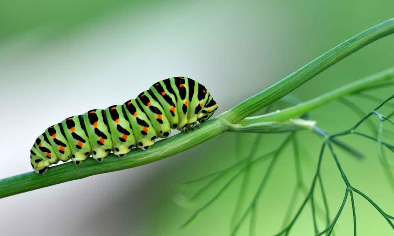 get rid of caterpillar