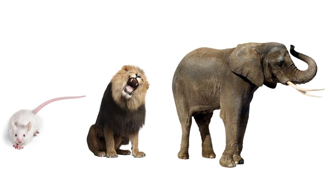 Mouse, Lion, Elephant