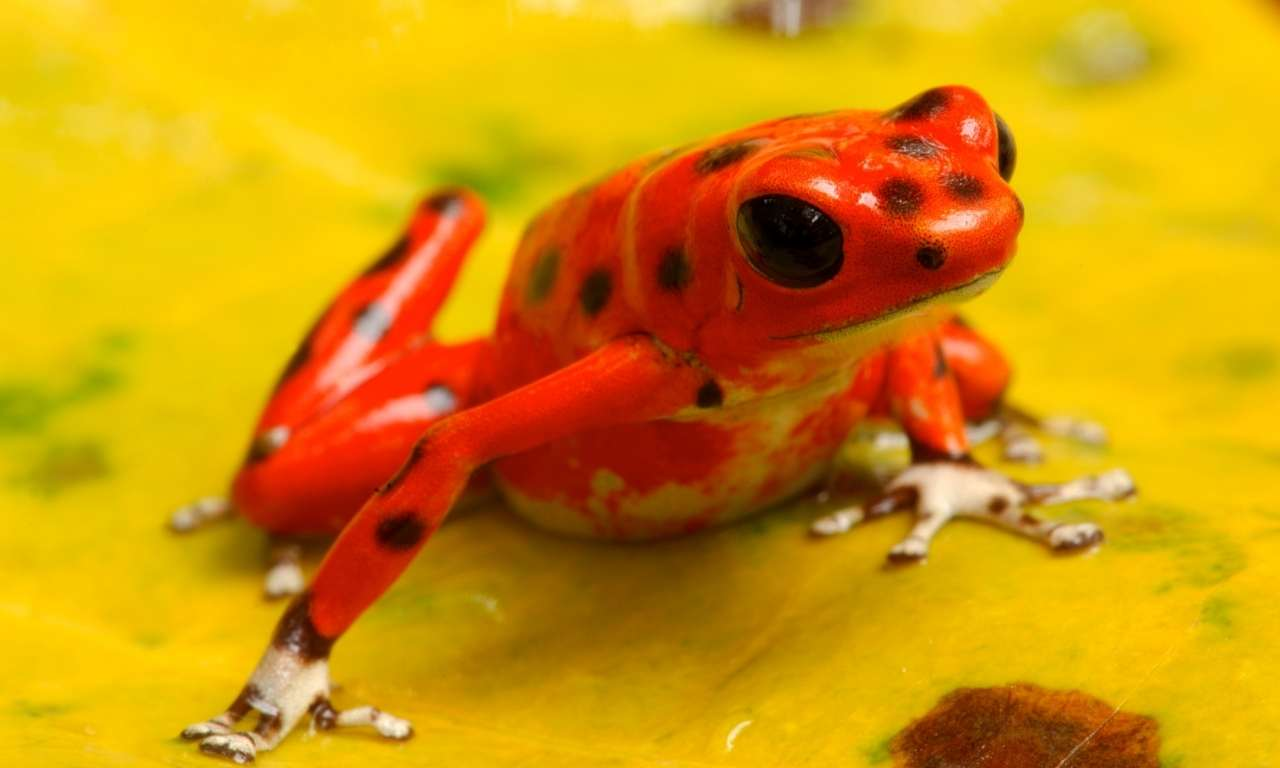 Which Animal Throws Bright Colours When Attacked