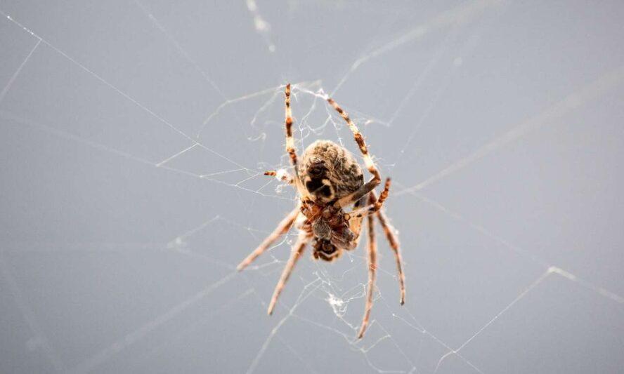 How Do Spiders Make Silk