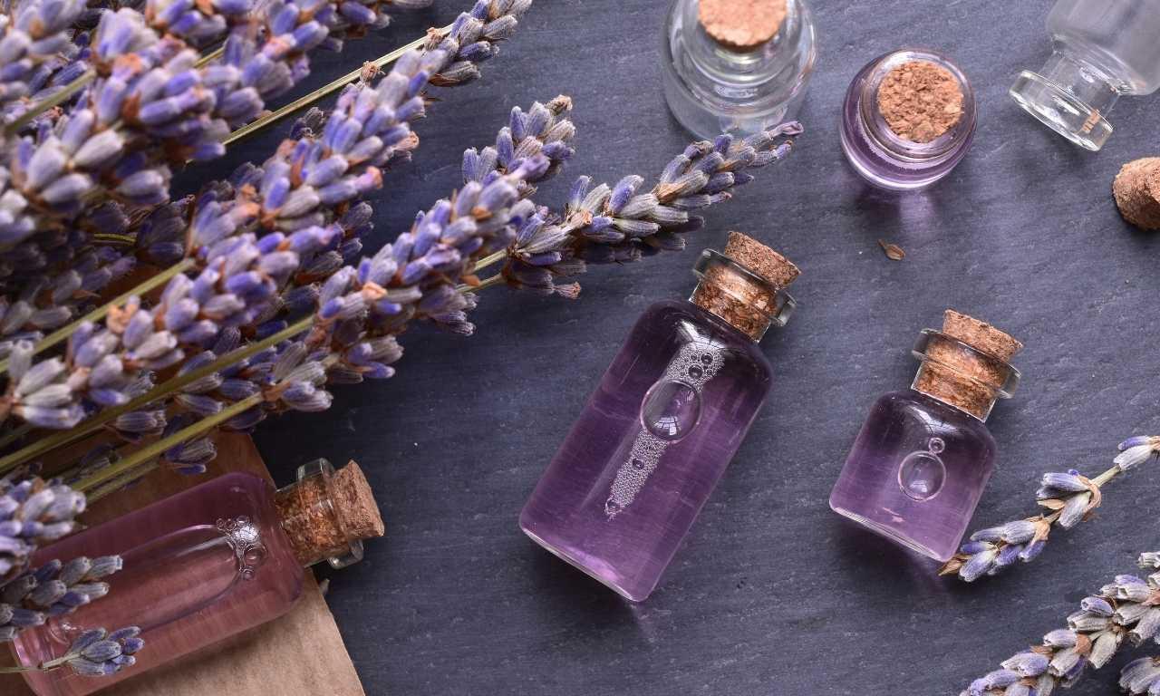 lavender oil as snake repellent